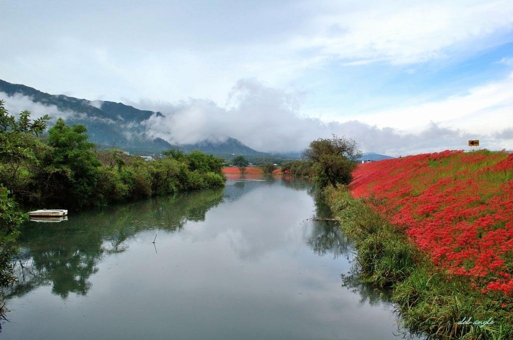 津屋川堤の彼岸花: del-angle